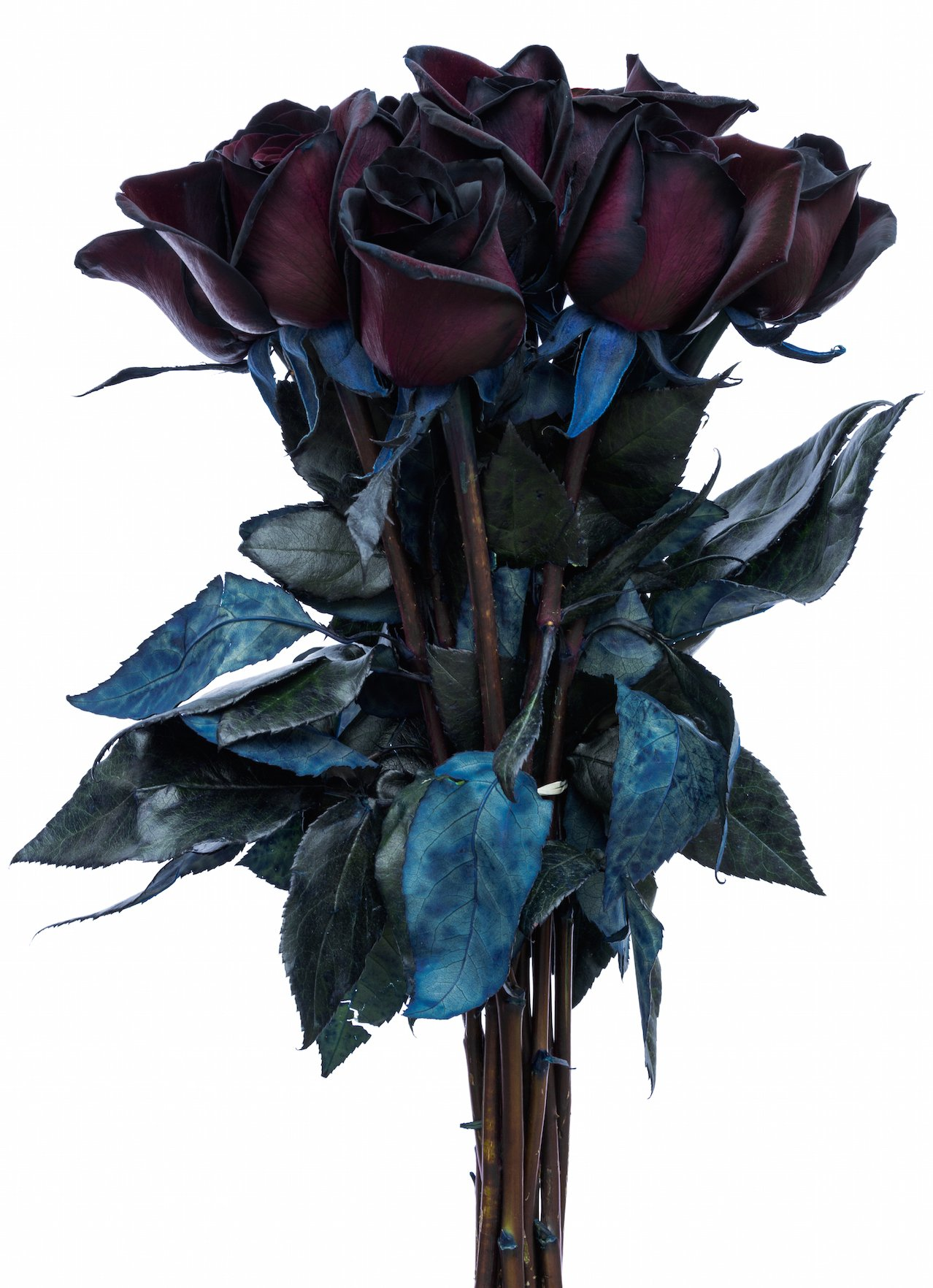 Amazon flower explosion black roses bouquet by real fresh amazon flower explosion black roses bouquet by real fresh tinted black roses 12 stems grocery gourmet food izmirmasajfo