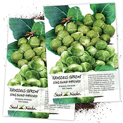 Seed Needs, Brussels Sprout Long Island Improved (Brassica oleracea) Twin Pack of 500 Seeds Each Non-GMO : Vegetable Plants : Garden & Outdoor