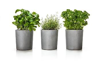 Plantes Aromatiques Spicepot Urbanature Set De 3 Cache Pots