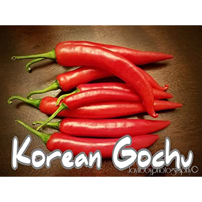 (25+) Korean Gochu Pepper Seeds : Garden & Outdoor