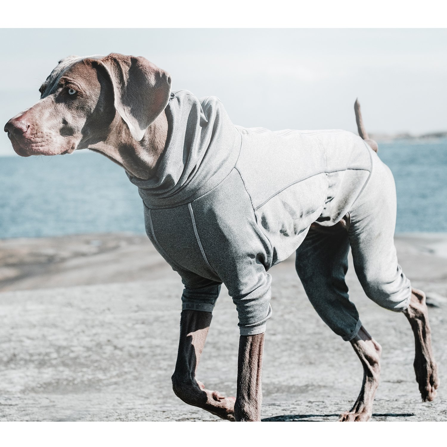 Hurtta Body Warmer Dog Body Suit, Recovery Suit, Carbon Grey, 18M by Hurtta (Image #2)