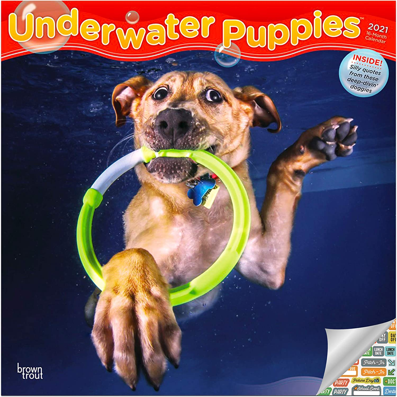 Underwater Puppies Calendar 2021 Bundle - Deluxe 2021 Underwater Puppies Wall Calendar with Over 100 Calendar Stickers (Underwater Puppies Gifts, Office Supplies)