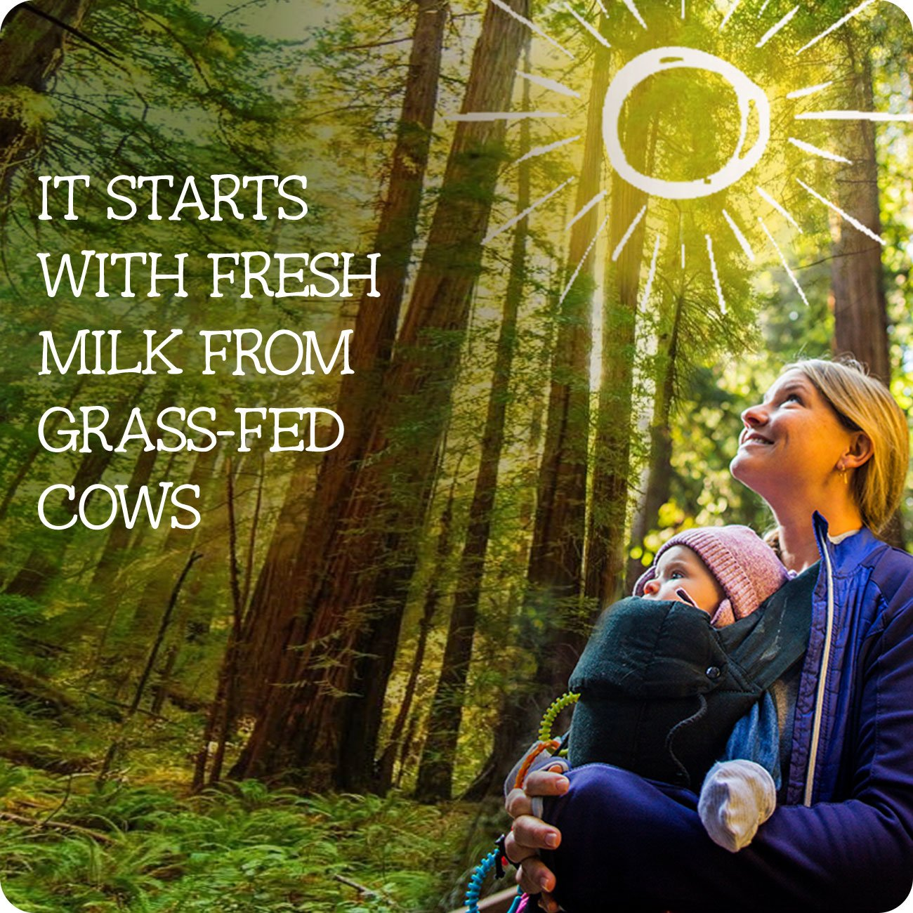 Pure Bliss by Similac Toddler Drink with Probiotics, Starts with Fresh Milk from Grass-Fed Cows, 12.4 ounces (Pack of 4) by Similac (Image #2)