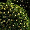 Solar Lichterkette, InnooTech LED Solar Blumen Lichterkette 5 Meter 50er Warmweiß, Außerlichterkette Deko mit 2 M Zuleitungskabel für Garten, Hochzeit, Party usw
