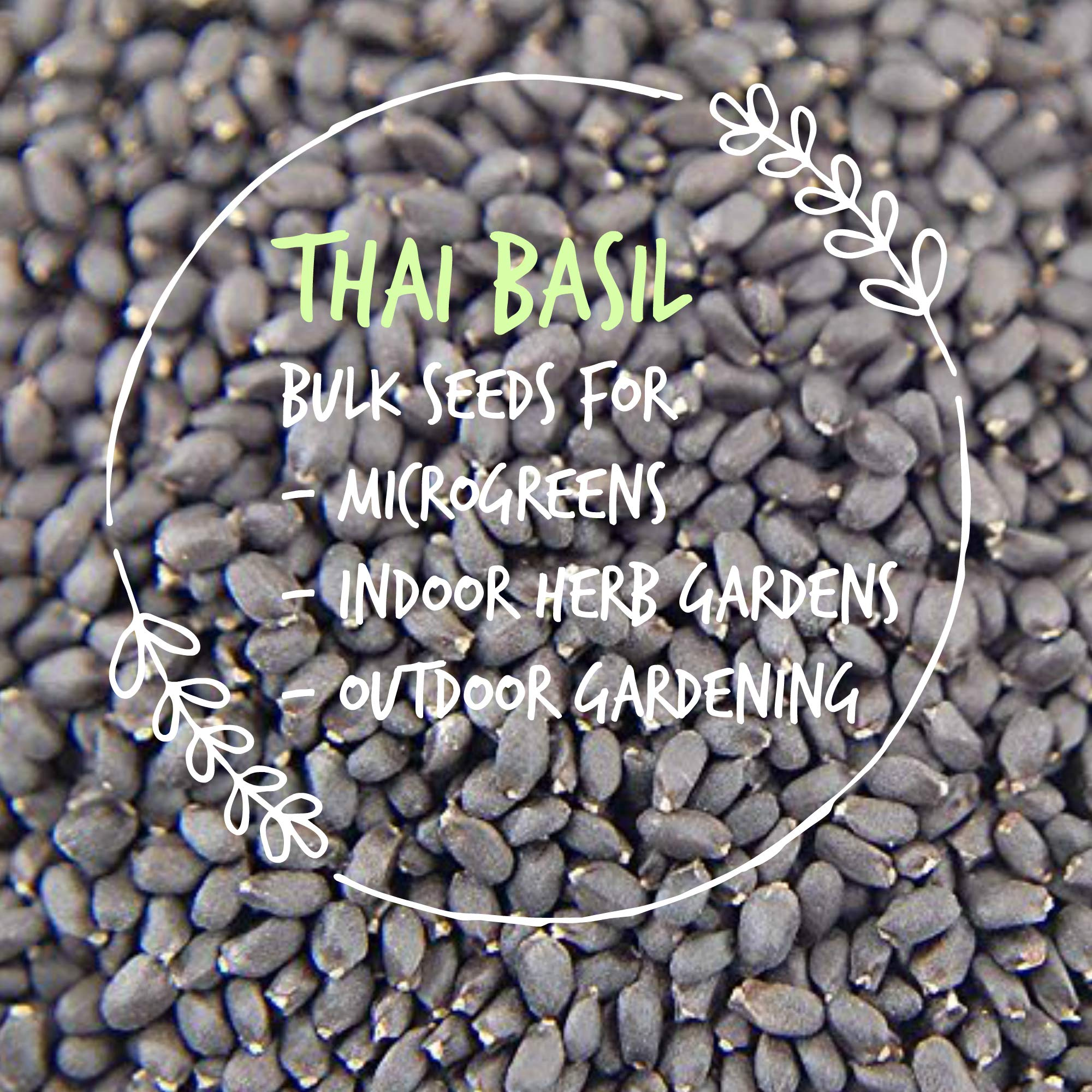 Thai Basil Seeds - Bulk Herb Seeds for Growing Microgreens, Indoor Gardening: Micro Greens Salad (1 Lb) by Mountain Valley Seed Company (Image #4)