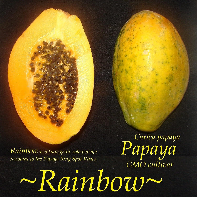 Anillo PAPAYA ARCO IRIS virus de la mancha resistentes a las enfermedades FRUTA Carica semilla fina 30: Amazon.es: Jardín