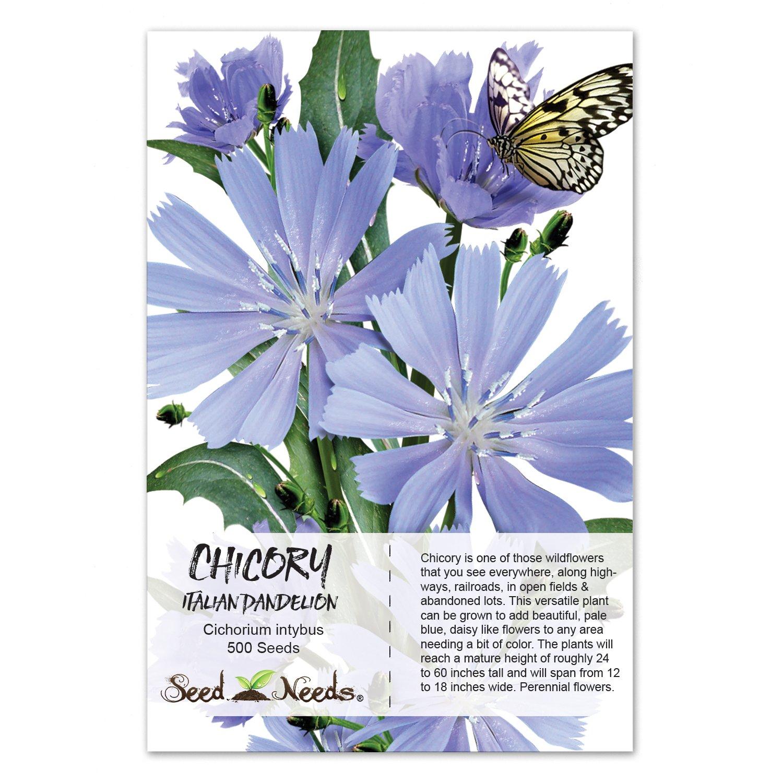 Amazon 500 Flower Seeds Chicory Italian Dandelion