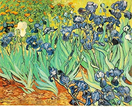 2 Irises Post Impressionism Vincent van Gogh-Frameless painting by number  kits 16x20 inch pictures on canvas