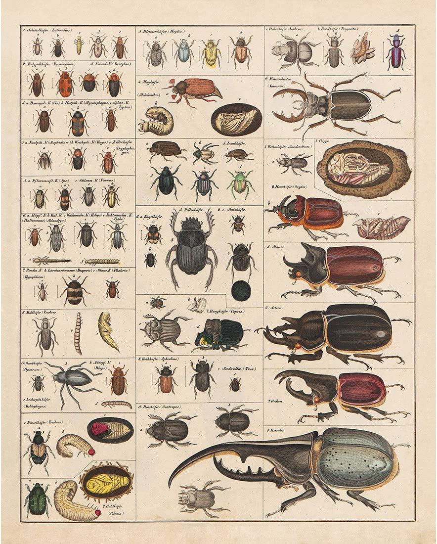 INSECTS BUGS VINTAGE ILLUSTRATION CHART ART PRINT Poster Home Decor Wall Picture