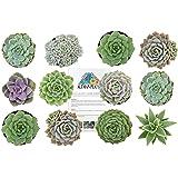 """Altman Plants Succulents Wedding Rosette Collection 2.5"""" 12 Pack"""