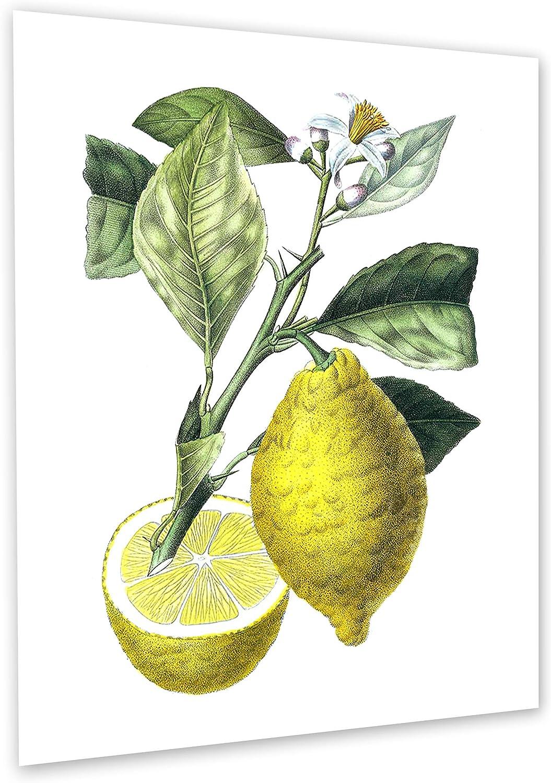 Farmhouse Kitchen Decor Lemons Art Print Set of 6 Unframed Botanical art