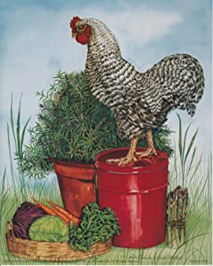 Barred Plymouth Rock Rooster Chicken Wall Decor Art Print Poster (16x20)
