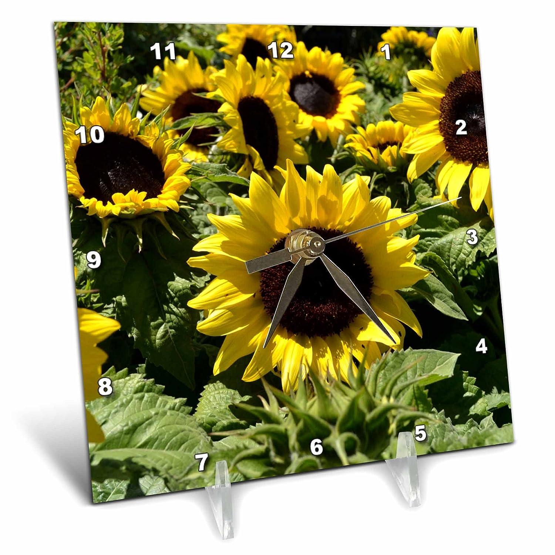 6 by 6-Inch 3dRose dc/_22692/_1 Sunflowers Desk Clock