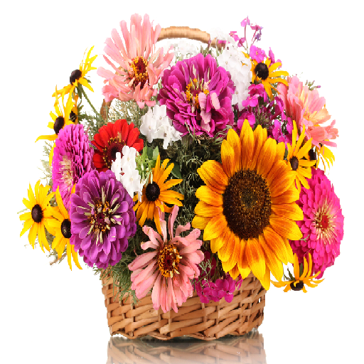 Mothers Day Flowers and Gifts ()