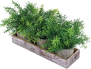 Set of 3 Mini Potted Plants in Wood Planter Arrangement Artificial Green Rosemary Greenery Plants in Pots with Wood Planter Box for Rustic Indoor Bathroom Kitchen Tabletop Centerpiece Window Decor