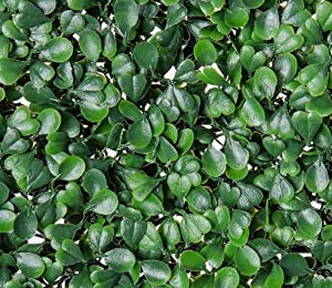 Artificial Hedge Plant,Greenery Panels Suitable for Both Outdoor or Indoor use,Garden,Backyard and/or Home Decor,Use as Greenery Walls or Privacy Screen (DarkGreen Boxwood 20 x 20 Inch (12 pack))