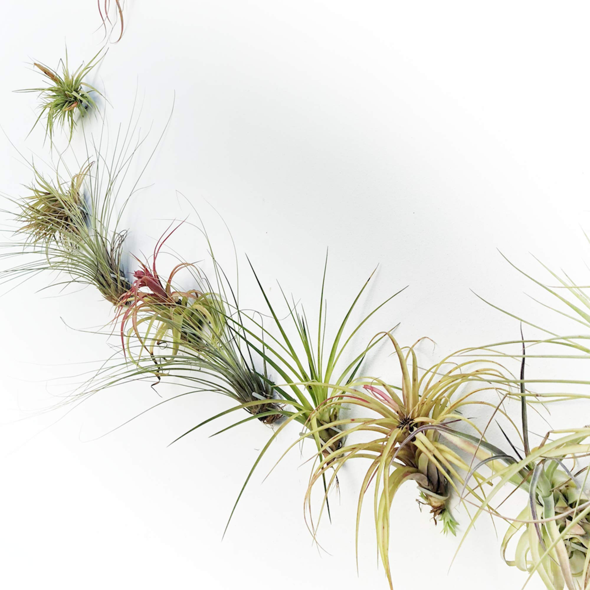 ArtAK Wall Planter Air Plant Holder Wall Hanging AIR KNOTS | 5 Wall Mount Planters for Large Air Plant & Vanda Display | Vertical Garden Modern Hanging Planter | Hanging Air Plants and Holders Grey by ArtAK (Image #5)