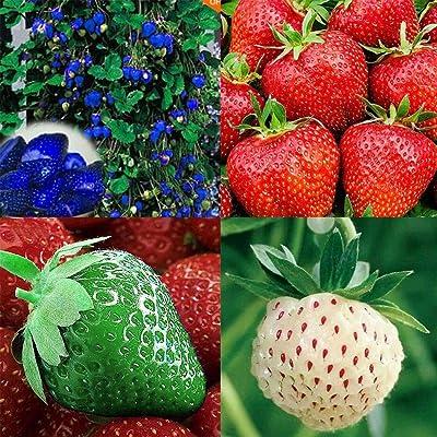 Zuckerfan 100pcs Giant Strawberry Seeds, Sweet Red Strawberry/Organic Garden Strawberry Fruit Seeds, for Home Garden Planting : Garden & Outdoor