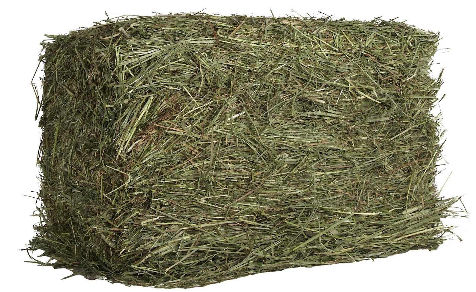 Oxbow Animal Health Western Timothy Hay For Pets, 25-Pound by Oxbow