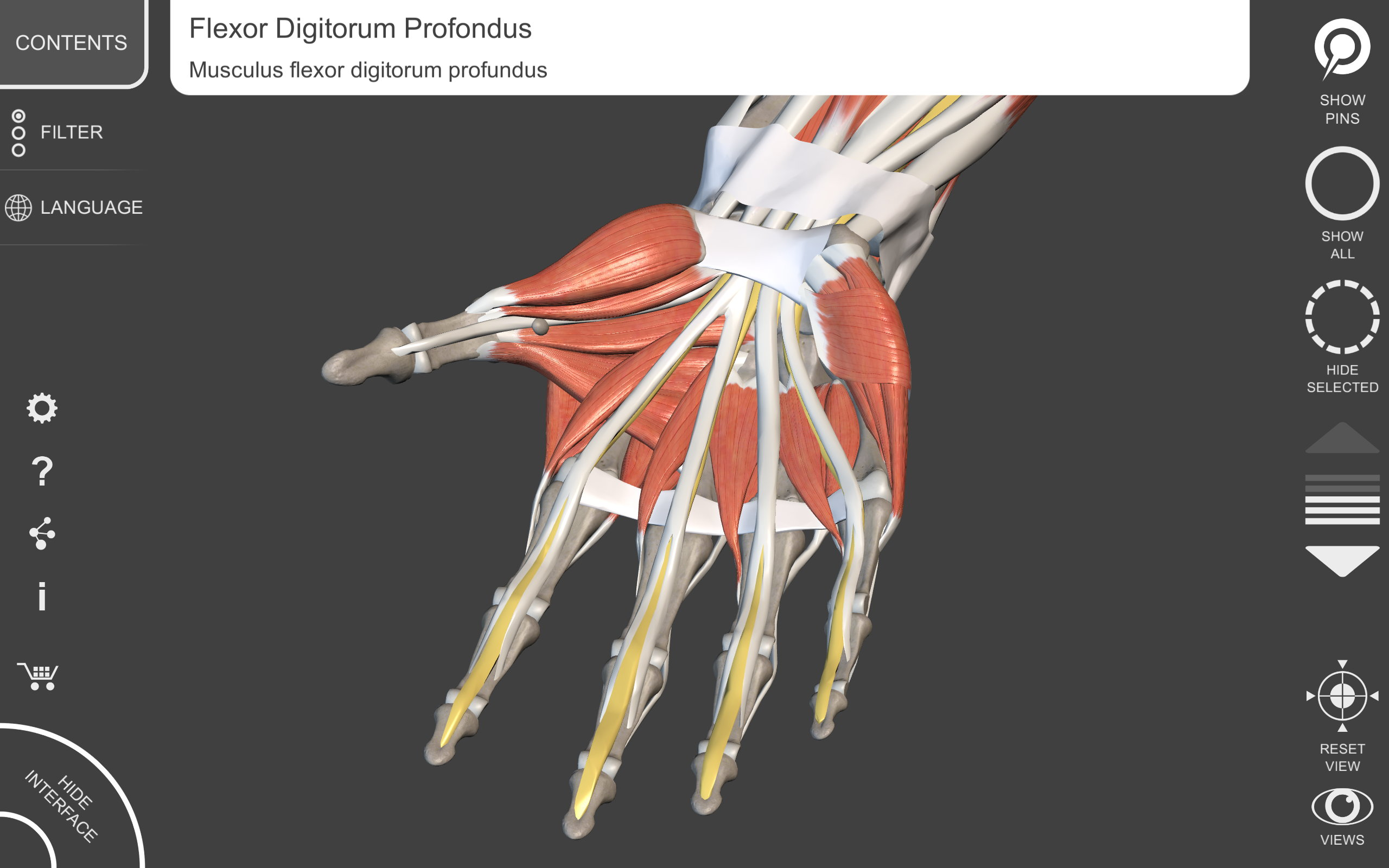 Amazon Muscular System Lite 3d Atlas Of Anatomy Appstore For