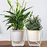 Kurtzy Self Watering Flower Pot for Garden Planters Indoor Outdoor Living Room Bedroom Balcony Table Vase Home Decor Set of 2