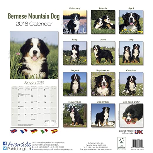 bernese mountain dog calendar only dog breed bernese mountain dogs calendar 2016 wall calendars dog calendars monthly wall calendar by avonside