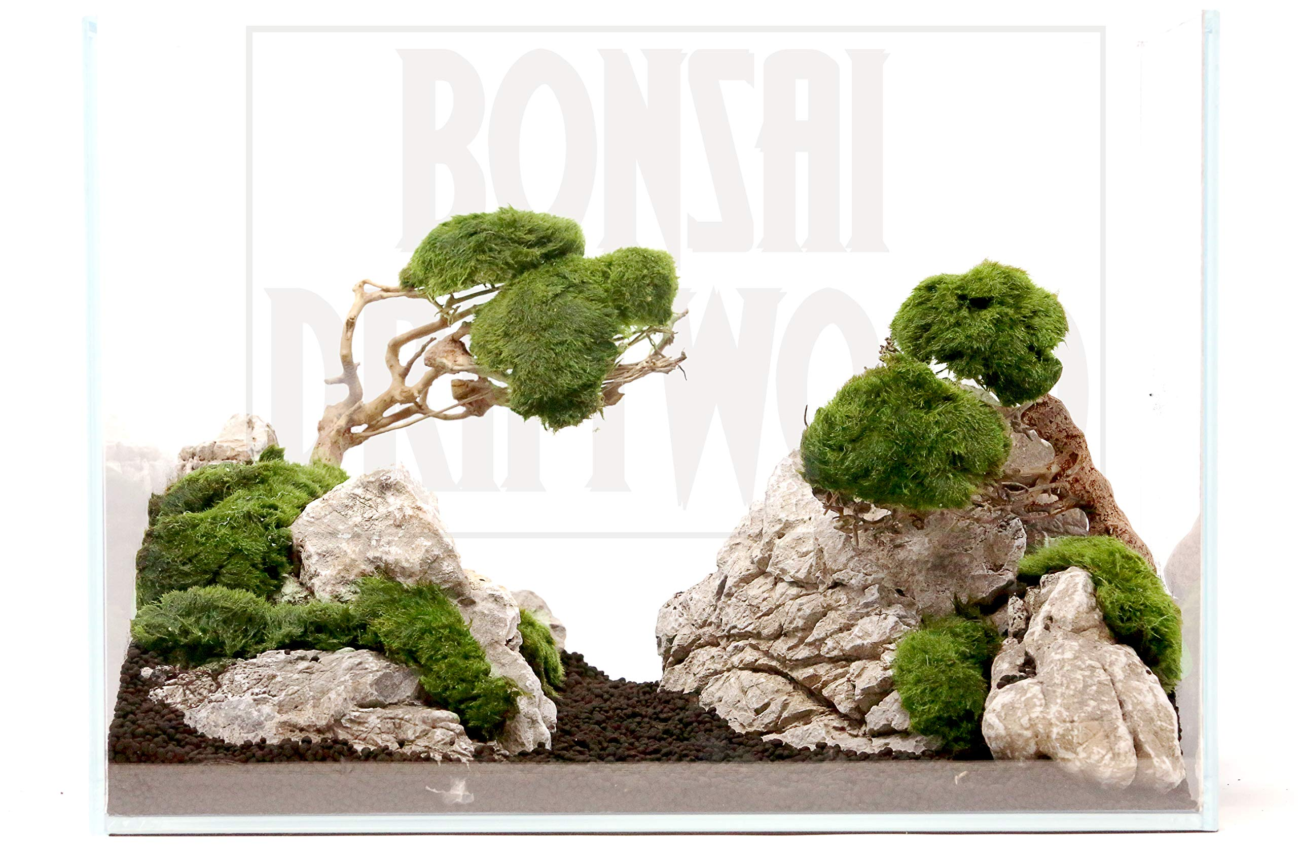 Bonsai Driftwood Aquarium Tree (5 Inch Height) Natural, Handcrafted Fish Tank Decoration | Helps Balance Water pH Levels, Stabilizes Environments | Easy to Install by Bonsai Driftwood (Image #7)