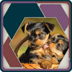 HexSaw - Puppies