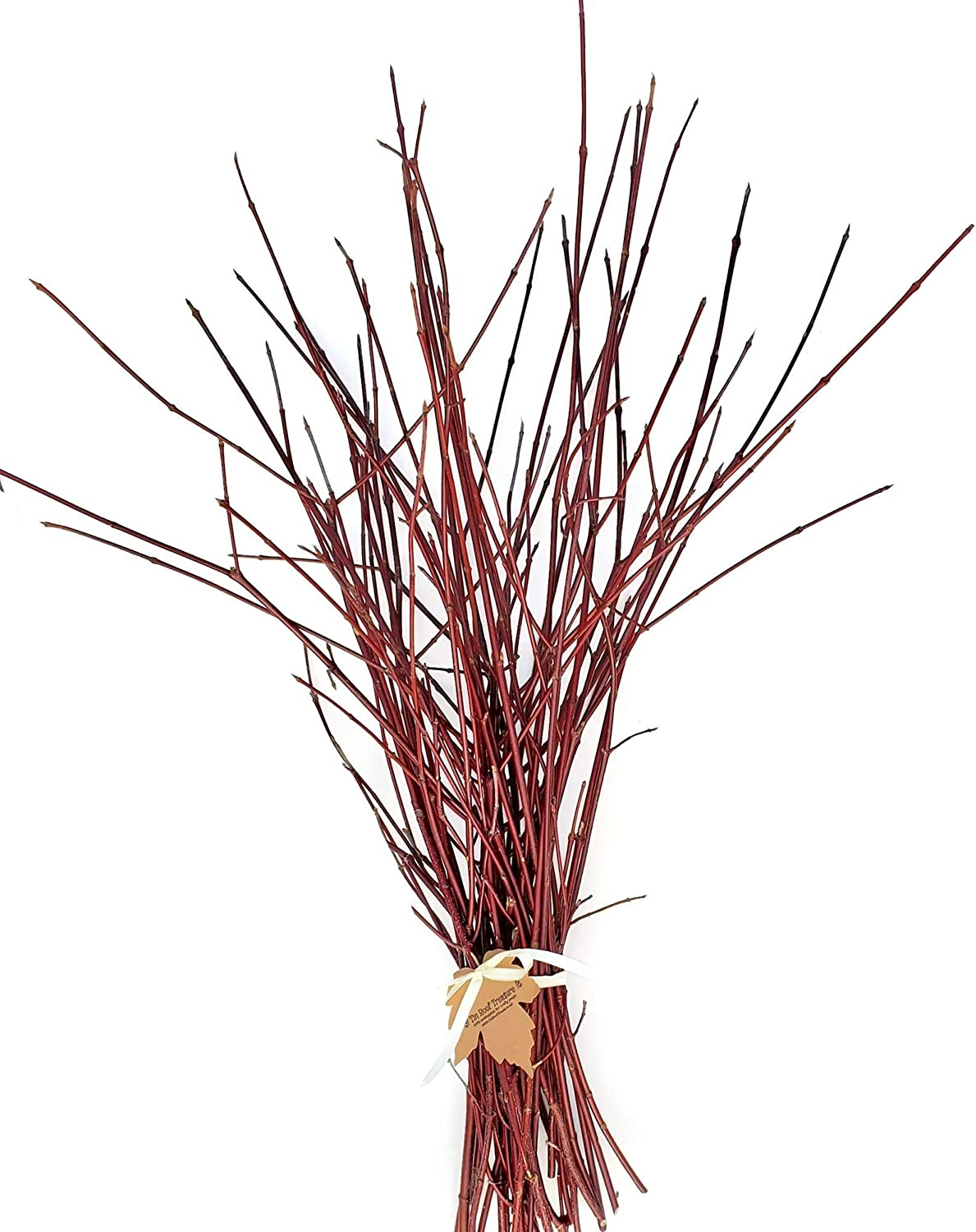 Red Dogwood Branches, 2'-3', Pack of 15