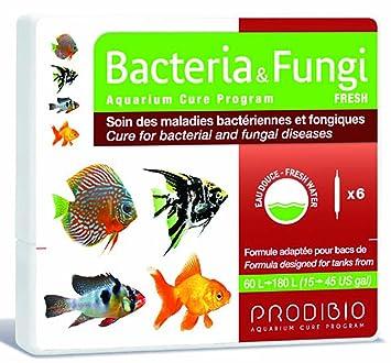 Bacteria et Fungi Fresh ampollas, contra bakterielle y seta Enfermedades en agua dulce Pesca, 6 unidades): Amazon.es: Productos para mascotas