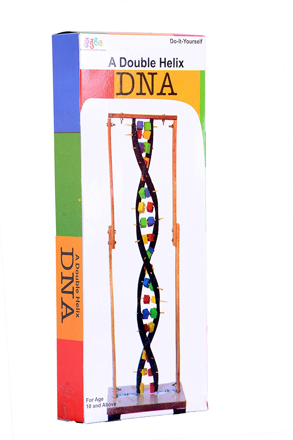 Buy kutuhal double helix dna model making kit hands on biology buy kutuhal double helix dna model making kit hands on biology concepts learning kit online at low prices in india amazon solutioingenieria Choice Image