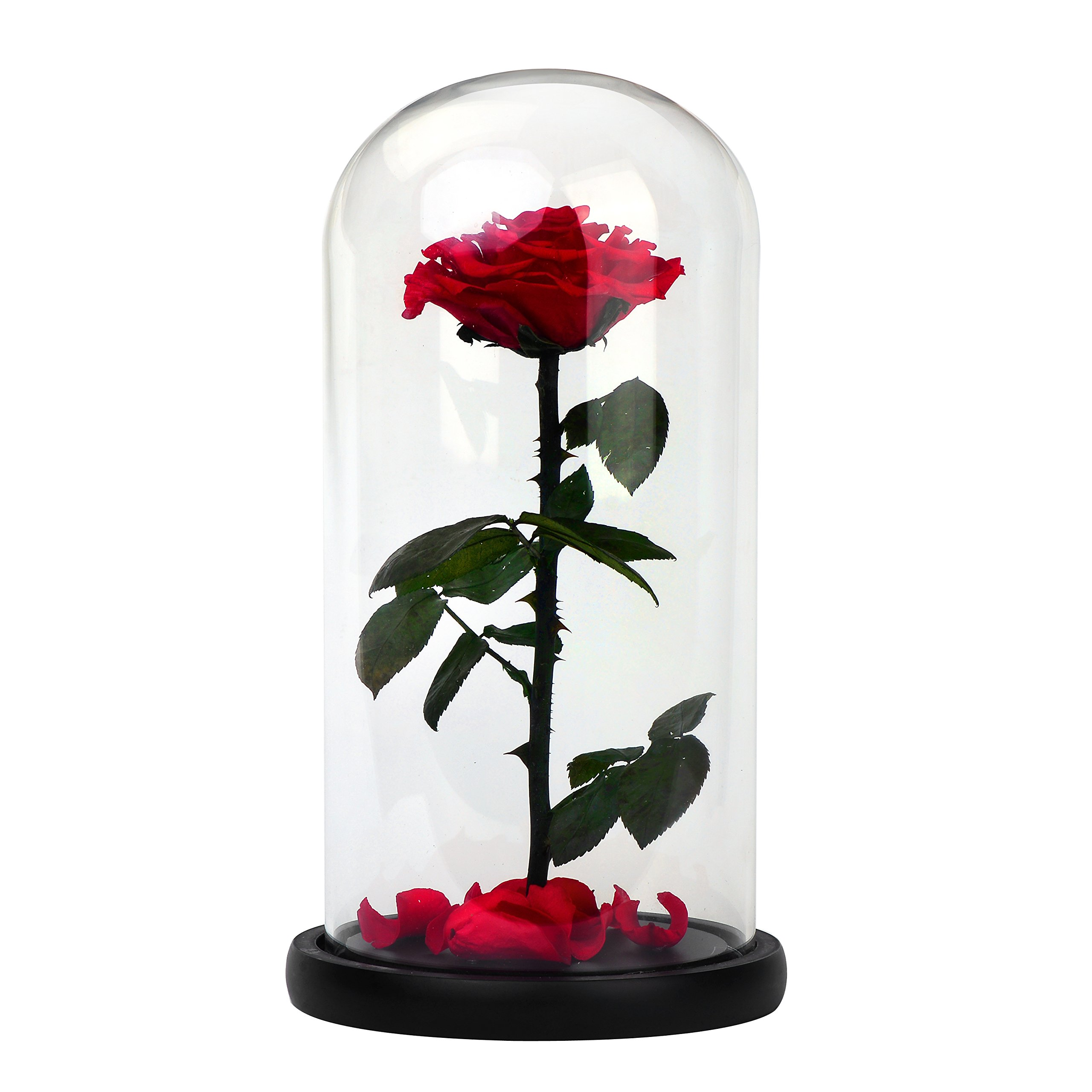 DeFancy Preserved Real Rose with Fallen Petals in Glass Cloche Dome with Black Wood Base-Best Gift Jar (Red)