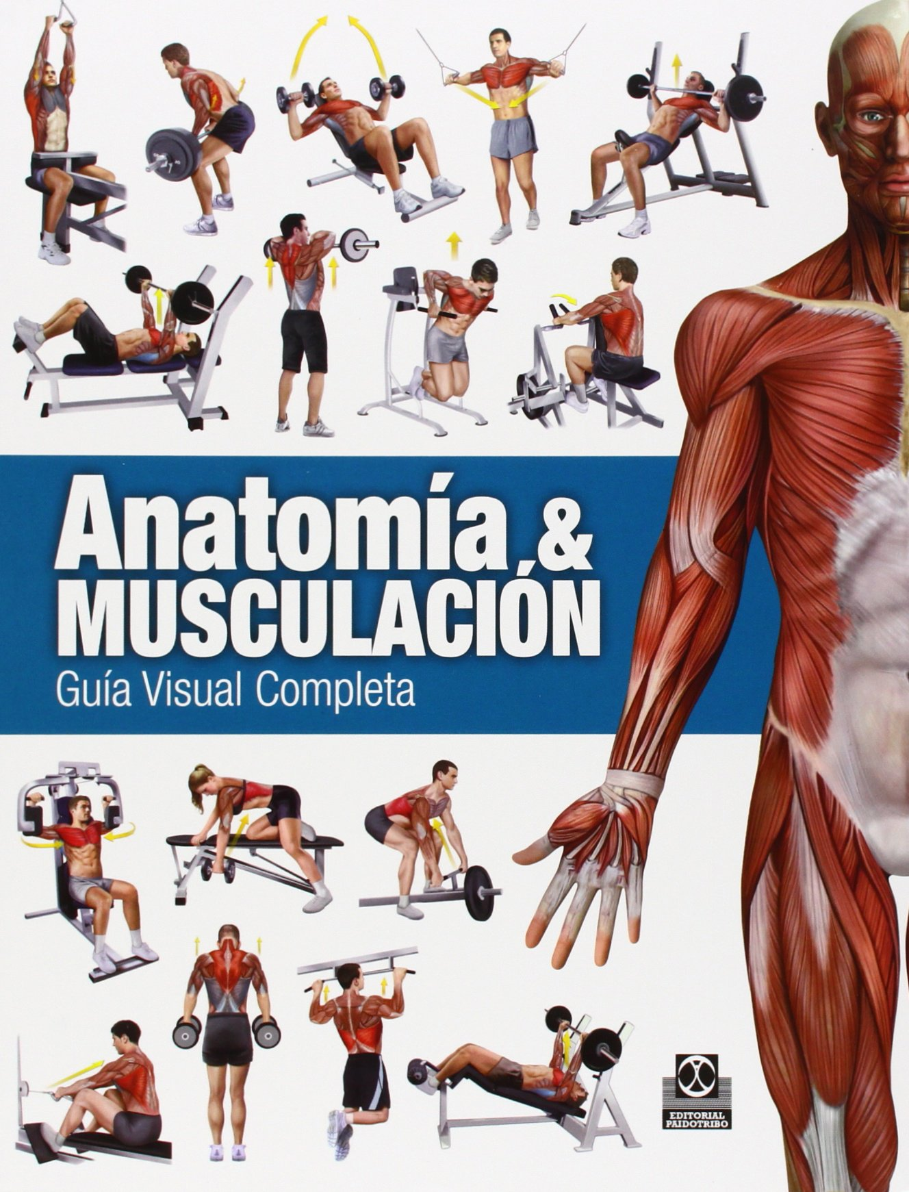 Anatomía y musculación: Guía visual completa: Guía completa: Ricardo ...