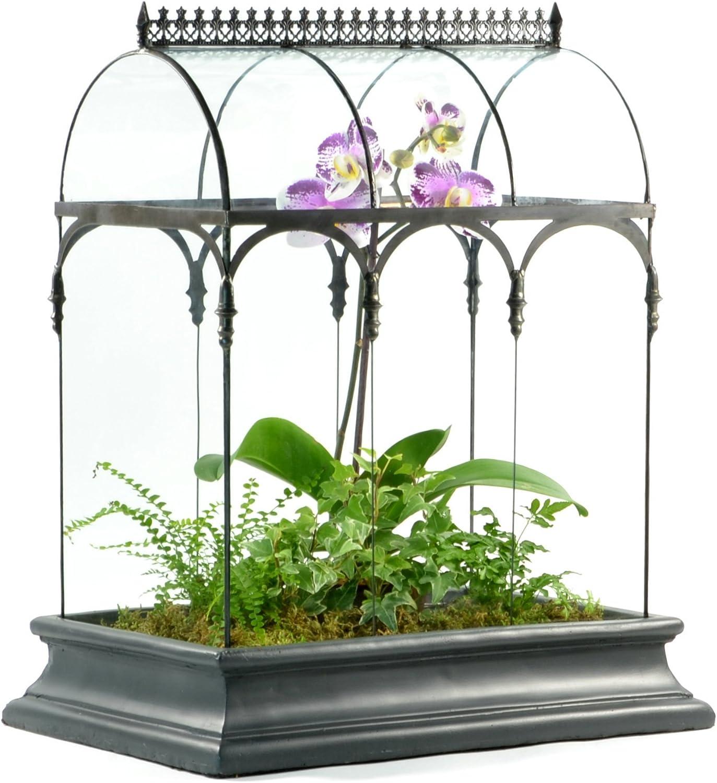 Terrarium Large Glass Succulent Planter Wardian Case Container for Plants from H Potter