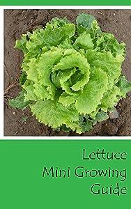 Lettuce Mini Growing Guide