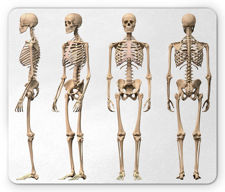 Amazon Ambesonne Human Anatomy Mouse Pad Man Male Human