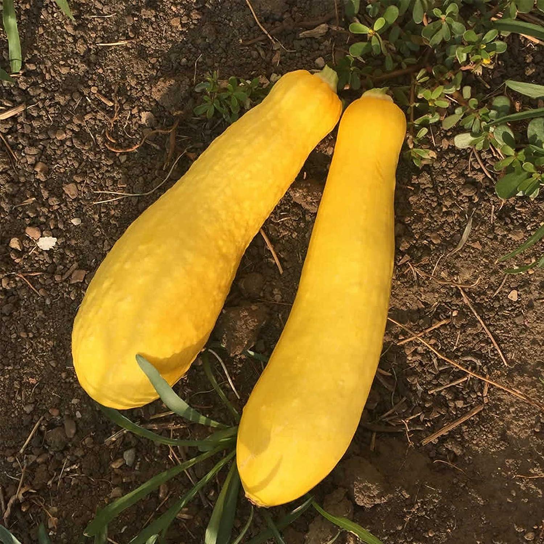 Vegetale-Squash-ROSA Banana 50 semi-grandi