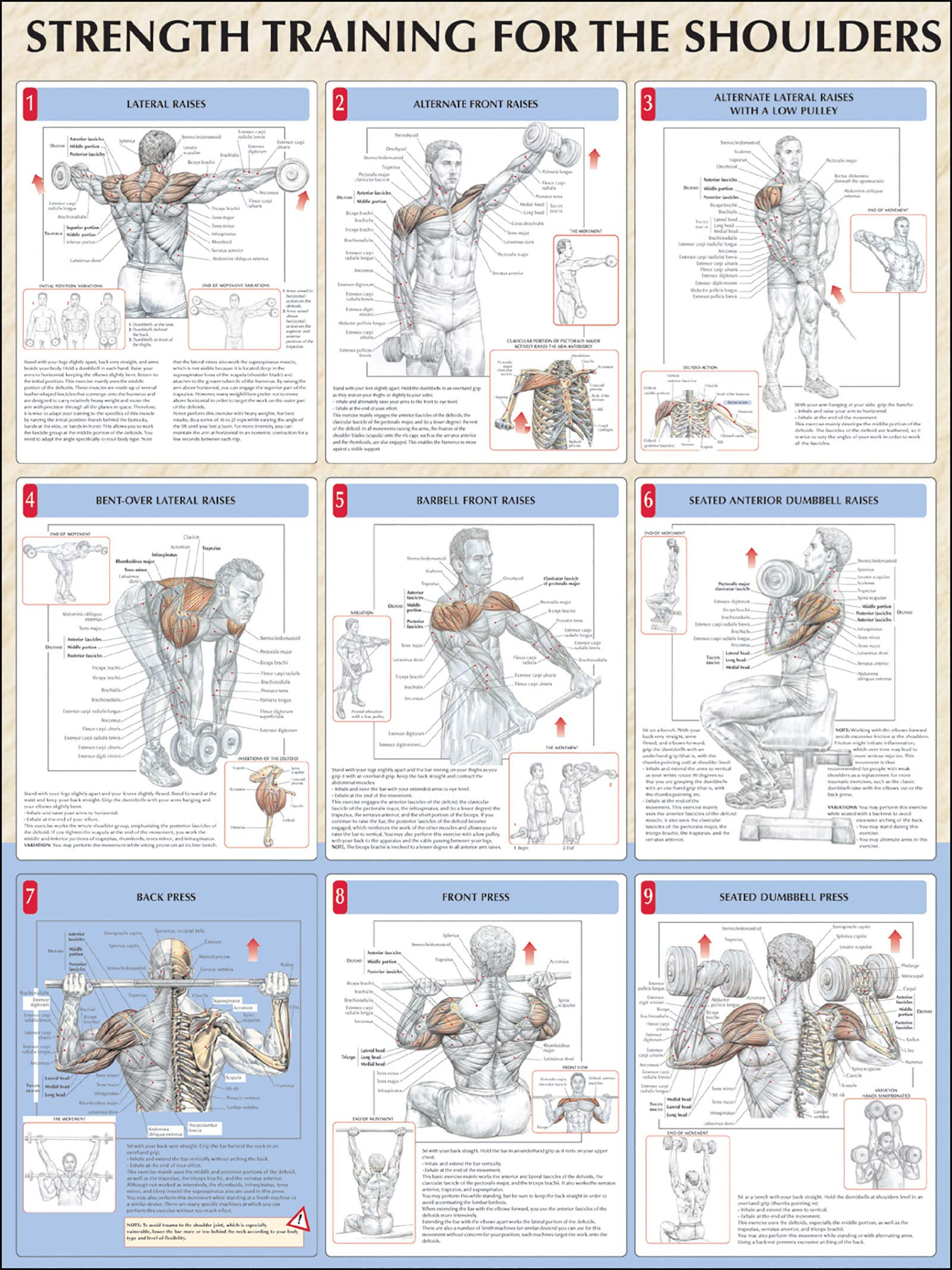 Strength Training Anatomy Strength Training For The Shoulders