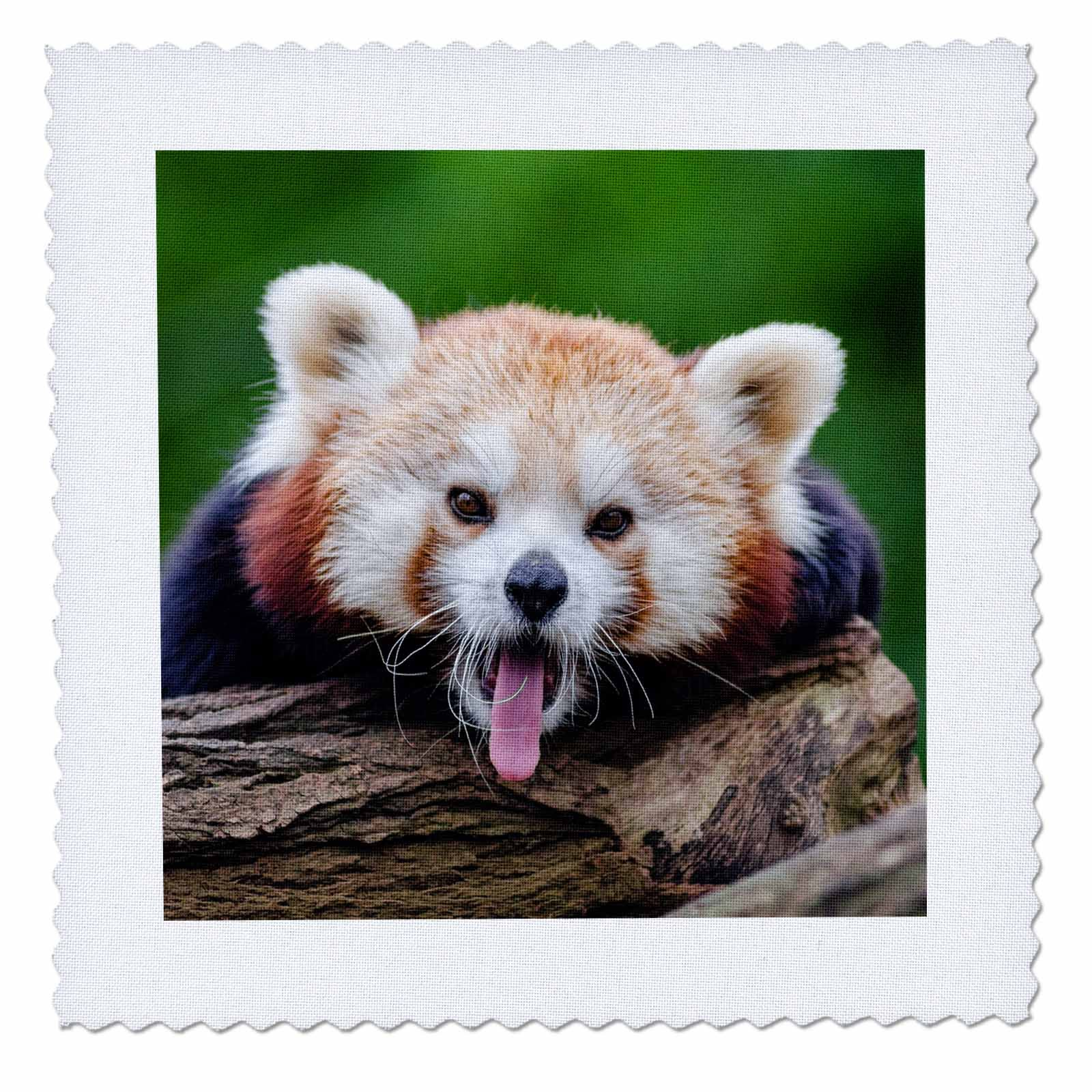 3D Rose Red Panda Bear in The Wildlife Nature Animal Quilt, 10 x 10