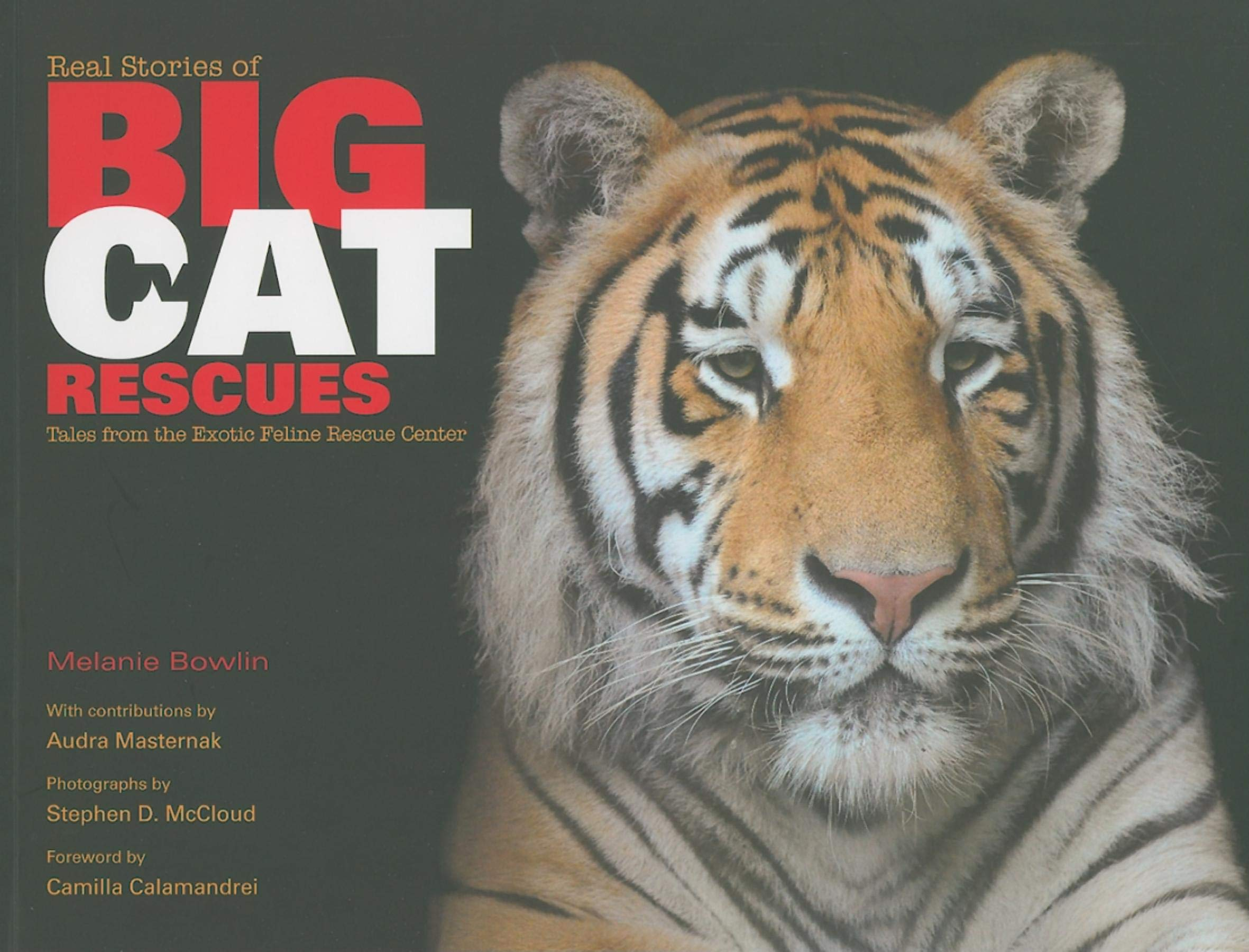 Real Stories of Big Cat Rescues: Tales from the Exotic