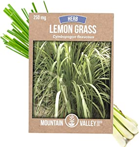 Lemon Grass Seeds for Planting Outdoor - 250 Mg Packet - Non-GMO, Heirloom Culinary Herb Garden Lemongrass Seeds - Cymbopogon flexuosus Mosquito Repellent Seeds