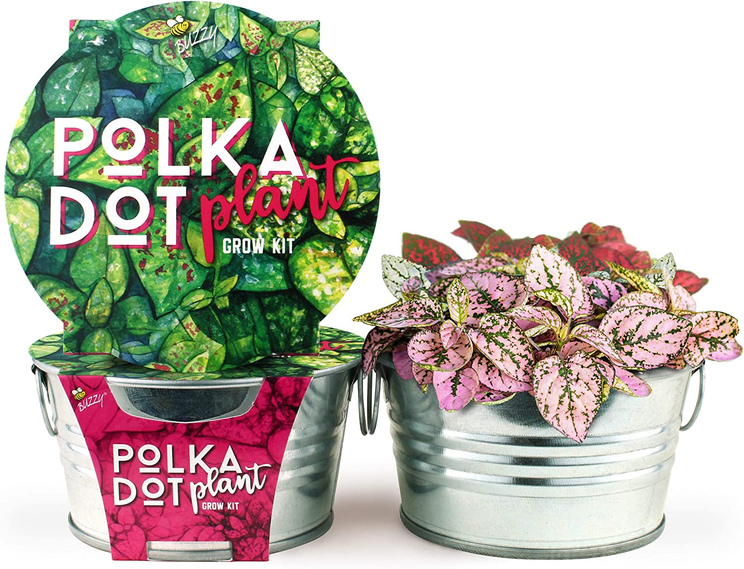 BUZZY Mini Basin Seed Grow Kit | Polka Dot Plant | Painted Garden Collection | Best Gardening Gifts, Favors, Weddings, Parties, Events, Modern, Trendy, Unique, and Fun | Growth Guaranteed