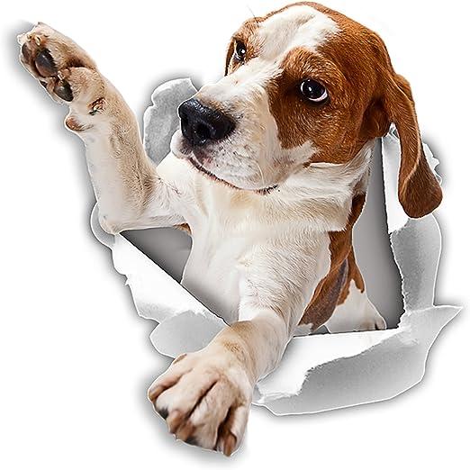 Winston & Bear Pegatinas 3D perro - 2 Pack - llegar a Beagle ...