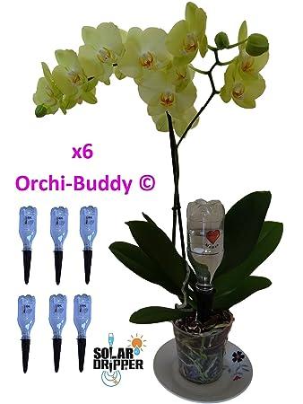 Automatische Bewasserung Fur Orchidee Orchi Buddy Von 6 Amazon De