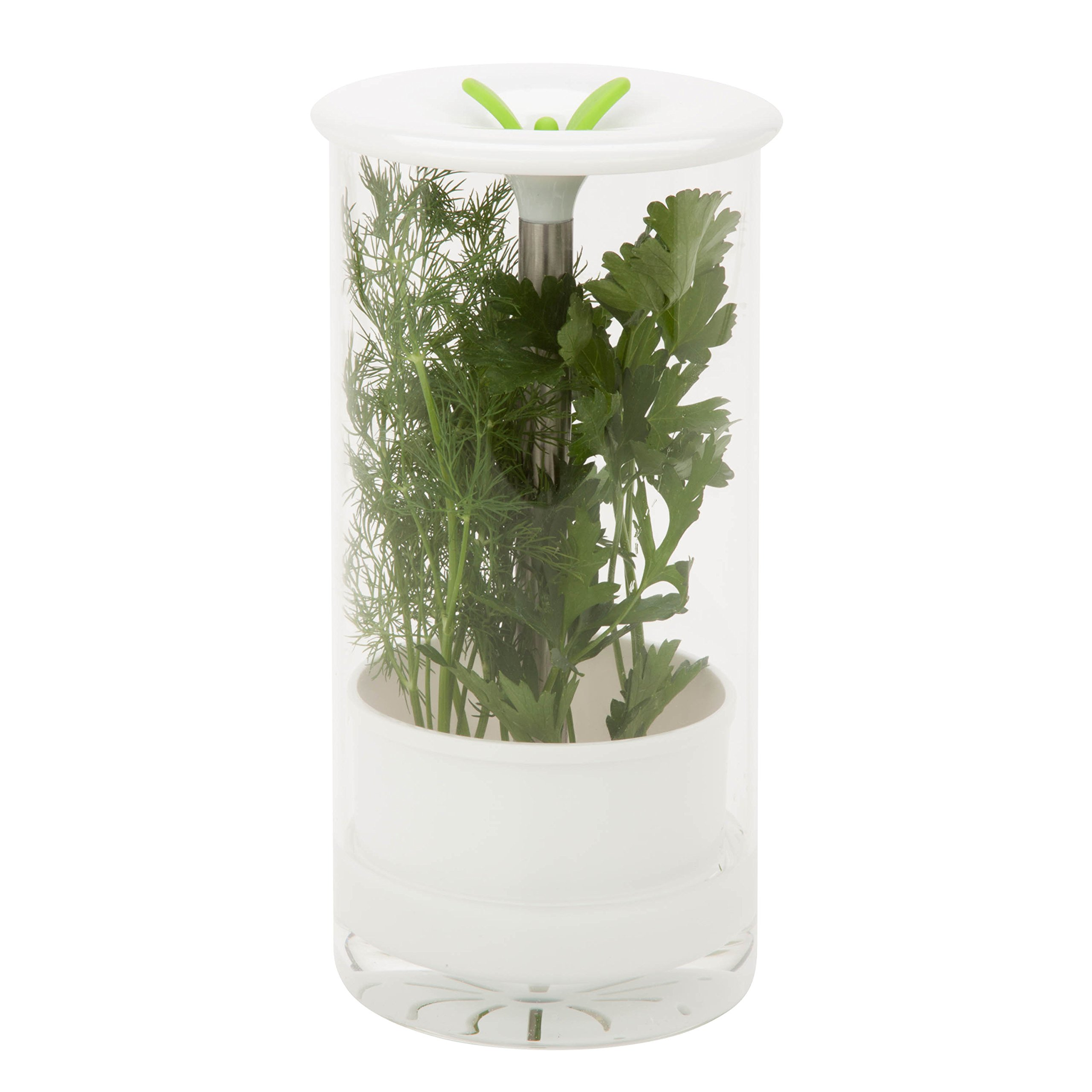 Honey-Can-Do KCH-06398 Glass Herb Preserver, Clear/White by Honey-Can-Do