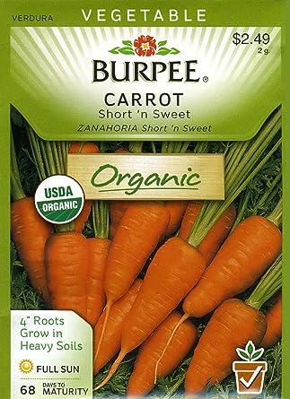CARROT SeedsNON-GMOFresh Vegetable Garden Short n Sweet US SELLER 25
