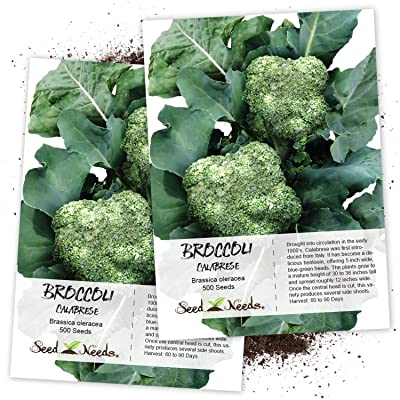 Seed Needs, Calabrese Broccoli (Brassica oleracea) Twin Pack of 500 Seeds Each Non-GMO : Vegetable Plants : Garden & Outdoor