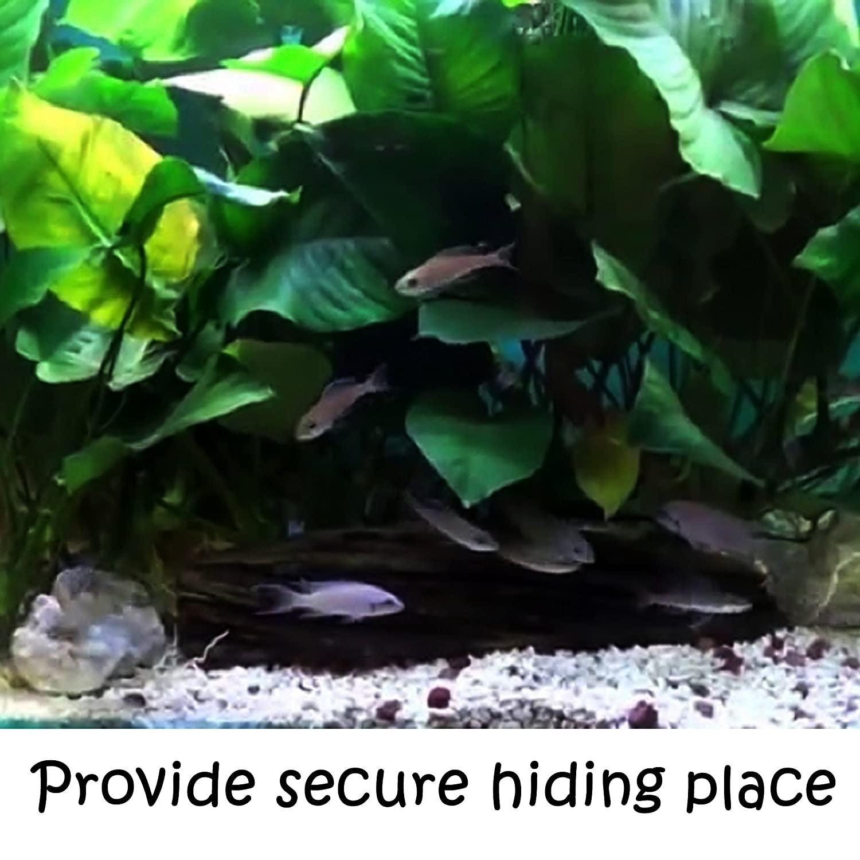 greenpro anubias java fern moss and more freshwater live aquarium