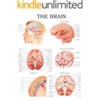 The brain e-chart: Quick reference guide