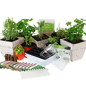 Medicinal & Herbal Tea Indoor Herb Garden Starter Kit